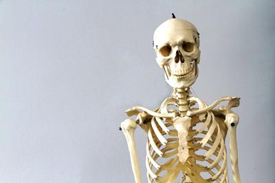 Das Skelett  YouTube